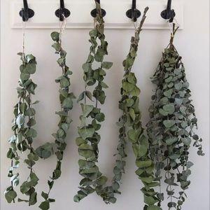 🌱RESTOCKED🌱Real Silver Dollar Eucalyptus-Dried